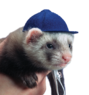 Шапочка Бейсболка, Baseball cap, Marshall